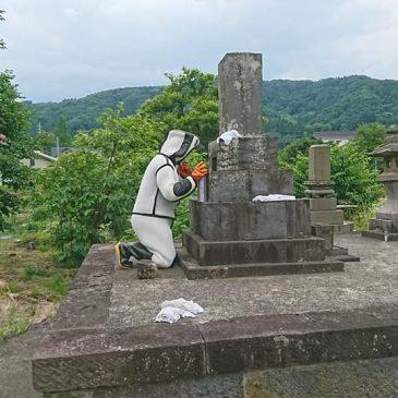 お墓の蜜蜂駆除(妙高市 N様)