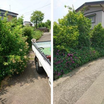空き地2か所の草取り、除草剤散布(上越市 S様)
