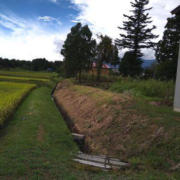 草刈り、立木の伐採(妙高市 M様)