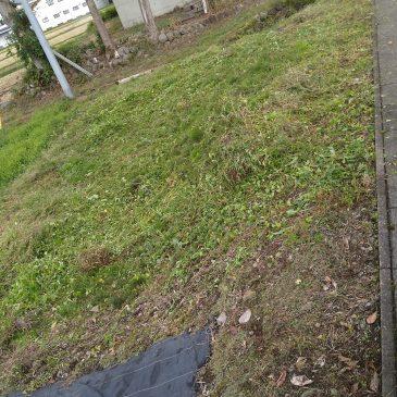 空き地の草刈りと除草剤散布(妙高市 H様)