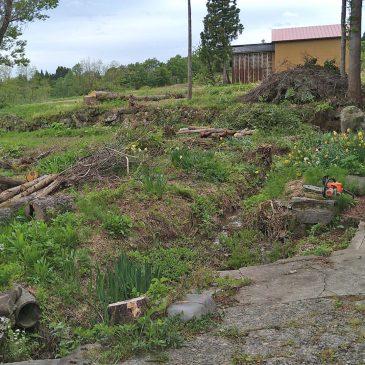 庭木の伐採(妙高市 M様)