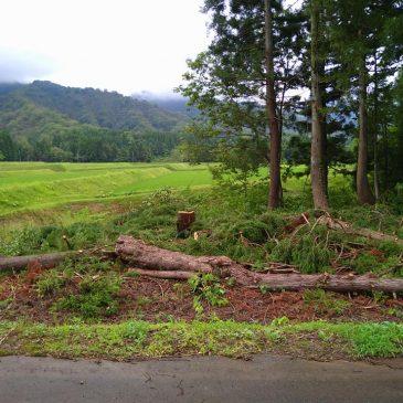 山林の伐採(妙高市 M様)